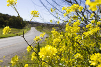 Country road and yellow wildflowers [1309227199]