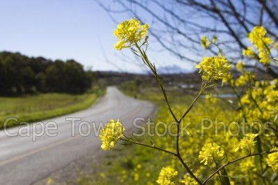 countryside,flora,flowers,roads