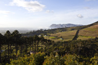 Hills and vineyards of Constantia [1309247266]
