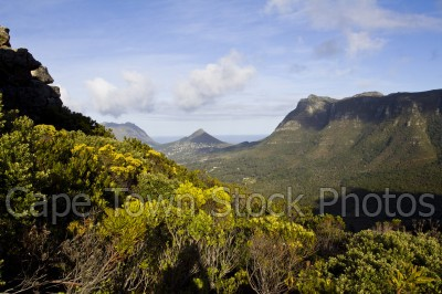 hills,table mountain,landscape,fynbos