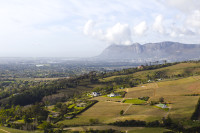 Vineyards of Constantia [1309247318]