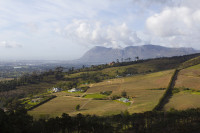 Vineyards of Constantia [1309247322]