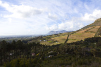 Vineyards of Constantia [1309247324]