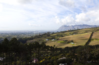 Vineyards of Constantia [1309247325]