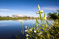 Flowers and Cape Town Stadium [1311018163]