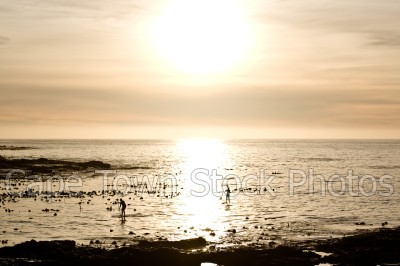 sea,sunset,sea point,three anchor bay,sup,water sport,golden hour