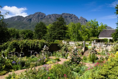 trees,gardens,stellenbosch,wine estate,mountains