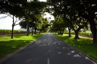 Road leading to Groot Constantia [1312289646]