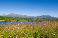 Stellenbosch and Boland Mountains from Asara [1401029805]