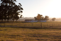 Farm houses in Durbanville [1401039851]