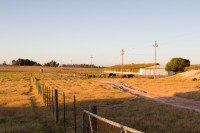 Durbanville cattle farm [1401039871]