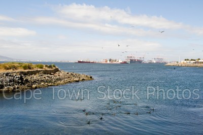 sea,table bay harbour,birds