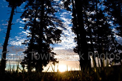 trees,blue sky,sunset,silhouette,grass,shadows