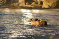 Dogs at the beach [1502177926]